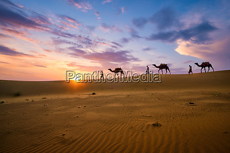 indian, cameleers, camel, driver, with, camel - 28470734