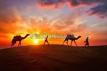 indische, kameltreiber, kamelfahrer, mit, kamelsilhouetten, in - 28470715
