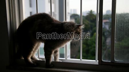 katze im wohnungsfenster