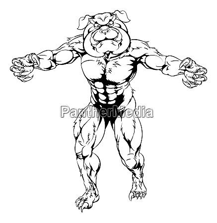 bulldog charakter greift an