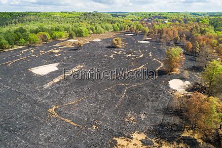 luftaufnahme verbrannten waldes nach einem waldbrand