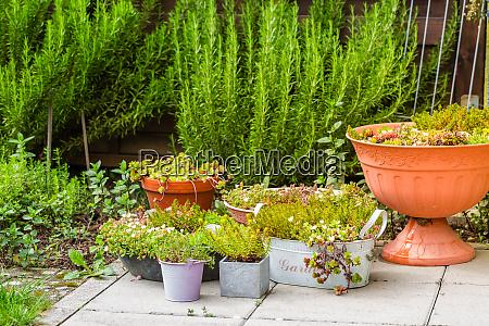 pottet pflanzen auf der terrasse im