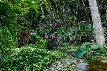 the garden of the perfume pagoda