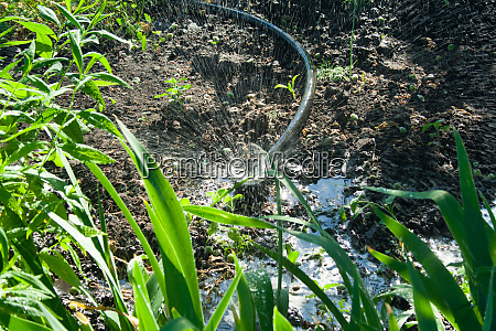 irrigation, system, in, the, garden - 28594670