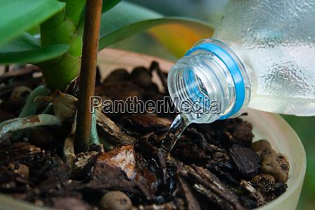 bewaesserung orchideenpflanze aus der flasche aus