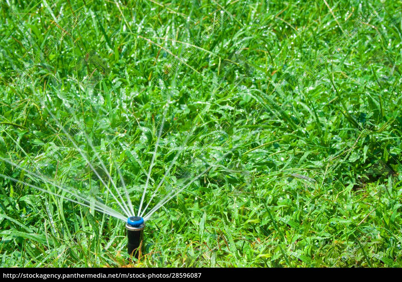 bewässerungsgras - 28596087