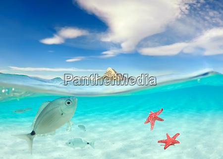 tuerkisfarbenes meer mit unterwasserblick tropisches meer