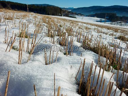 ackerkultur, unter, winterschnee - 28625704