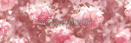 rosa vintage blumen banner