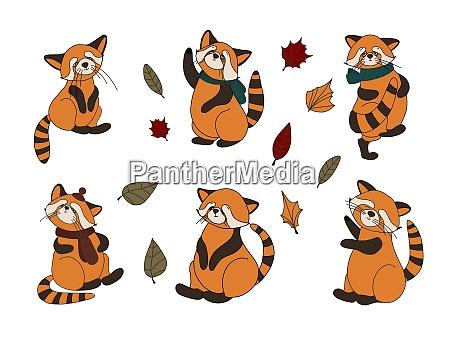 kleiner panda roter panda katzenbaer charakter