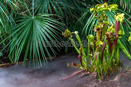 fleischfressende pflanzen in einem botanischen garten