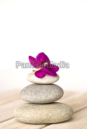 rosa orchidee und kiesel zen stil