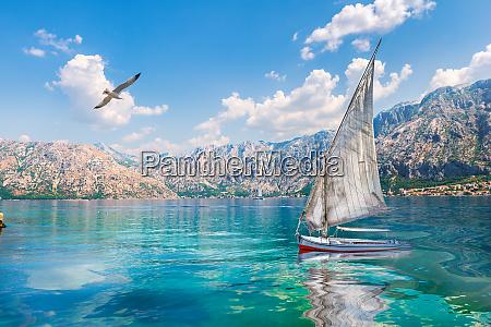 vogel und segelboot