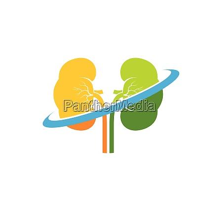nieren symbol vektor illustration design
