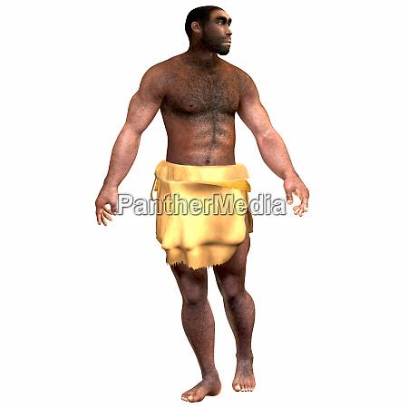 homo erectus maennlich