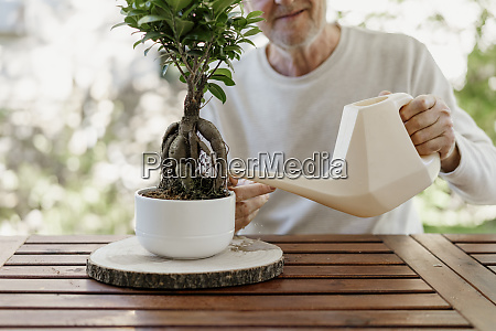 senior mann waessern bonsai pflanze