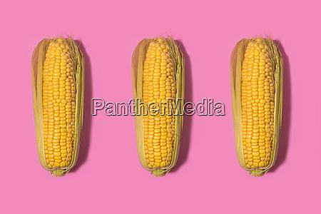 studioaufnahme von drei maisvordern vor rosa