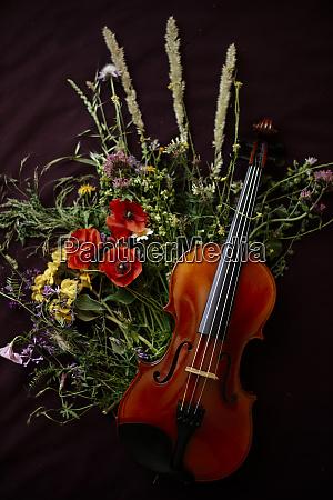 studioaufnahme der violine die sich auf