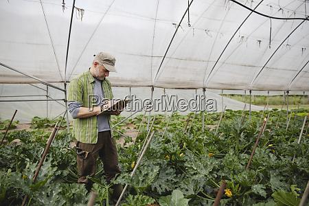 landwirt ueberprueft zucchinipflanzen oekologischen landbau