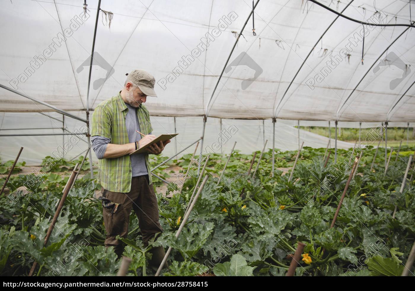 landwirt, überprüft, zucchinipflanzen, ökologischen, landbau - 28758415