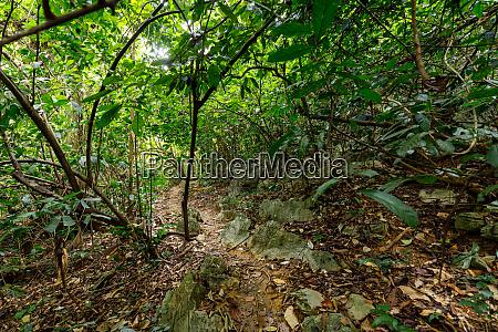 the jungle of cuc phuong at