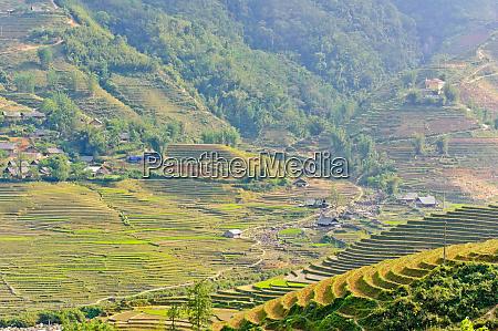 rice, terraced, fields, in, , sapa - 28797235