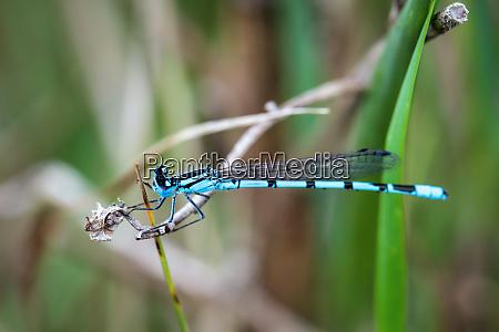nahaufnahme einer libelle auf einer pflanze