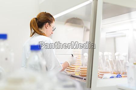 wissenschaftlerin die mit bakterien im laminaren