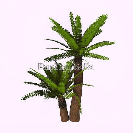 cycads sind samenpflanzen mit einer langen