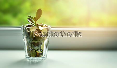 geldbaum waechst aus muenzglas auf sonnigen