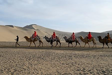 touristen auf kamelen werden durch die