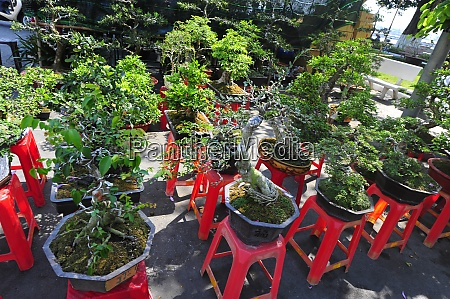 die bonsai kultur in vietnam