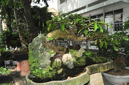 die, bonsai-kultur, in, vietnam - 28846627