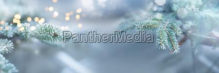 winterimpressionen mit kiefernzweigen