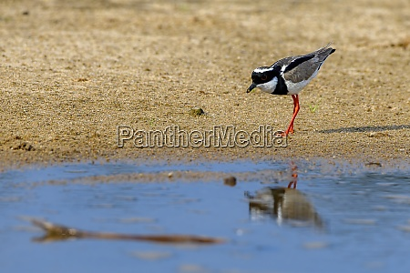 brasilien pantanal 2019 18664