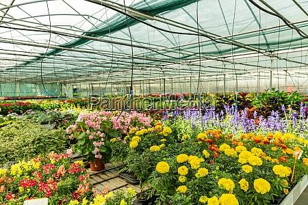 zierpflanzen, und, blumen - 28863402