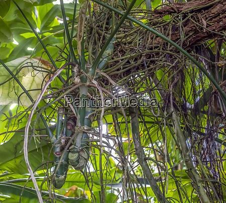 dschungel vegetation nahaufnahme