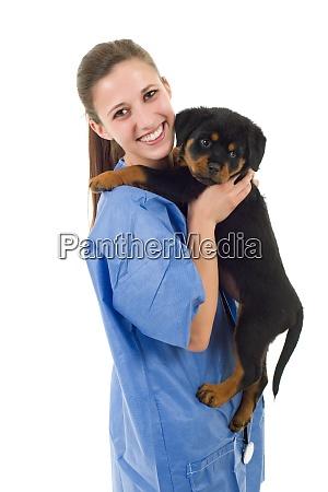brunette tieraerztliche mit einem rottweiler welpen