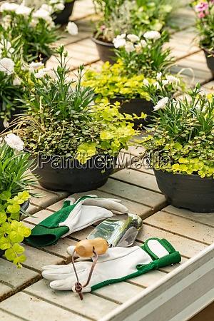 kleine dekorationspflanzen im topf