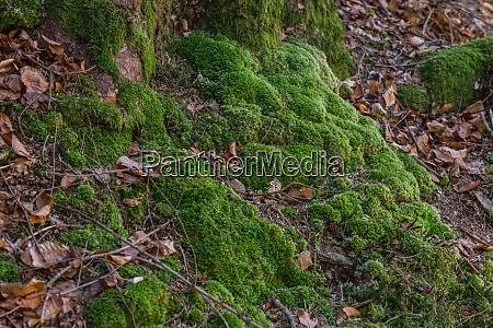 gruenes moos im wald beim wandern