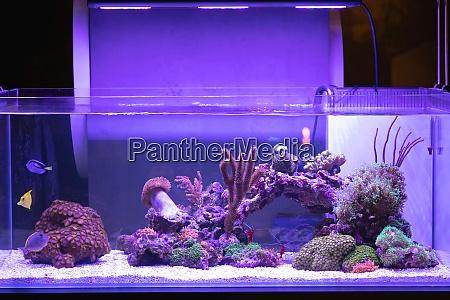grosses aquarium mit korallenriff fischtank