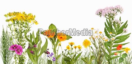 wiese mit heilpflanzen wie arnika ringelblume