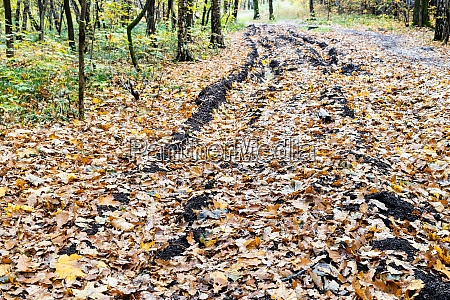 country, road, with, ruts, covered, with - 28941800