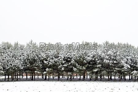 wintersaison landschaft