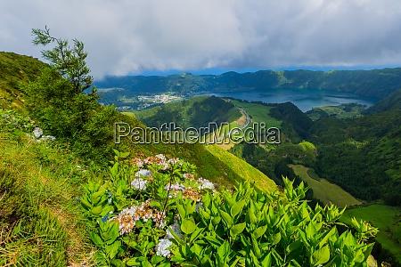 wildblumen im berg