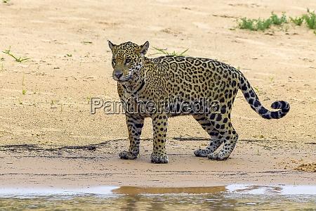brasilien pantanal 2019 22990