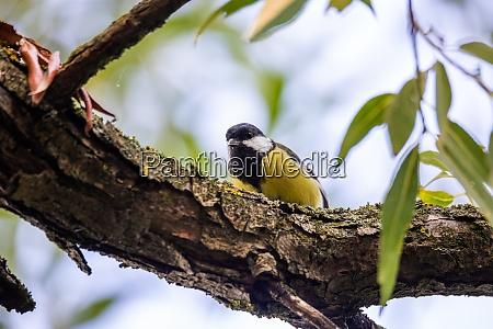 schöne, kleine, vogel, große, titten, im - 28950012