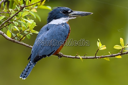 brasilien pantanal 2019 23277