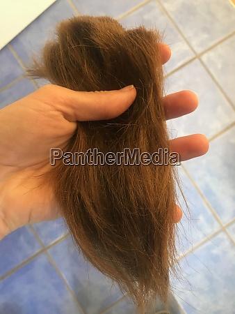 weibchen mit einer handvoll brauner haare