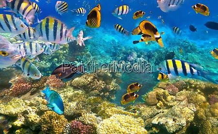 unterwasser bunte tropische fische
